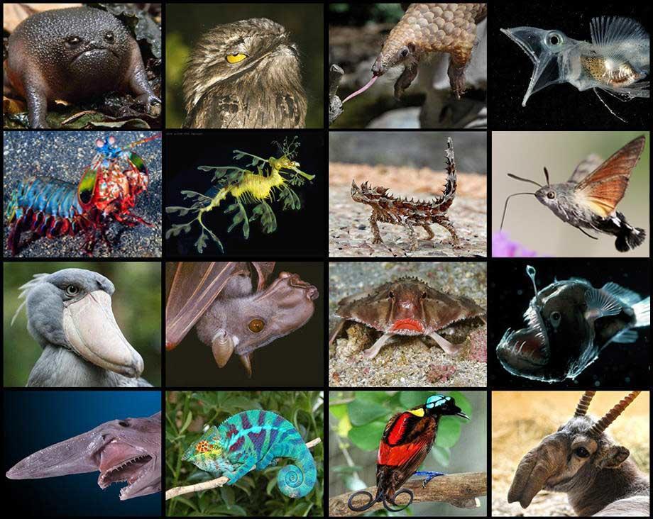 Weird-Looking Animals Quiz