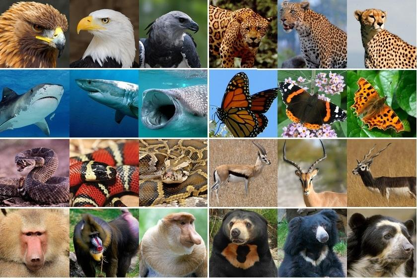 Quiz: What animal does each eye belong to?