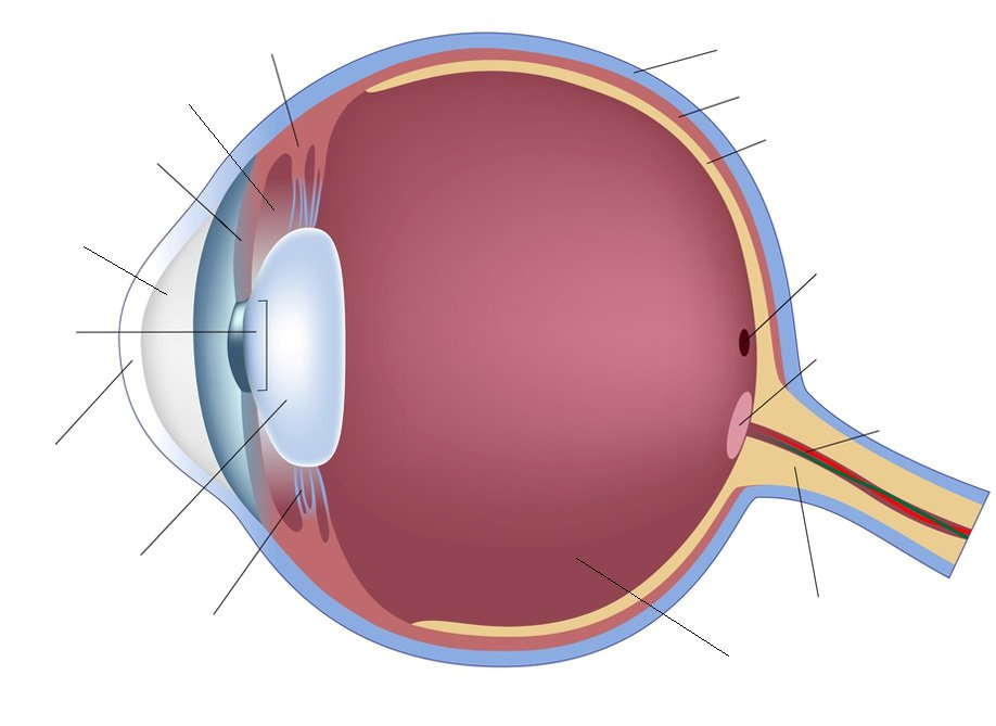 human eye anatomy quiz