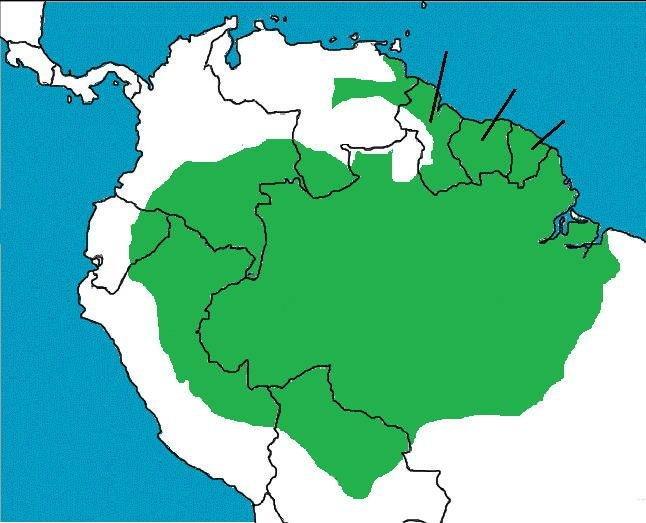 Click The Amazon Rainforest Countries Quiz