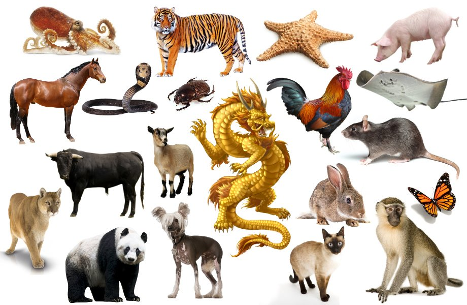 Find the Chinese Zodiac Animals Quiz