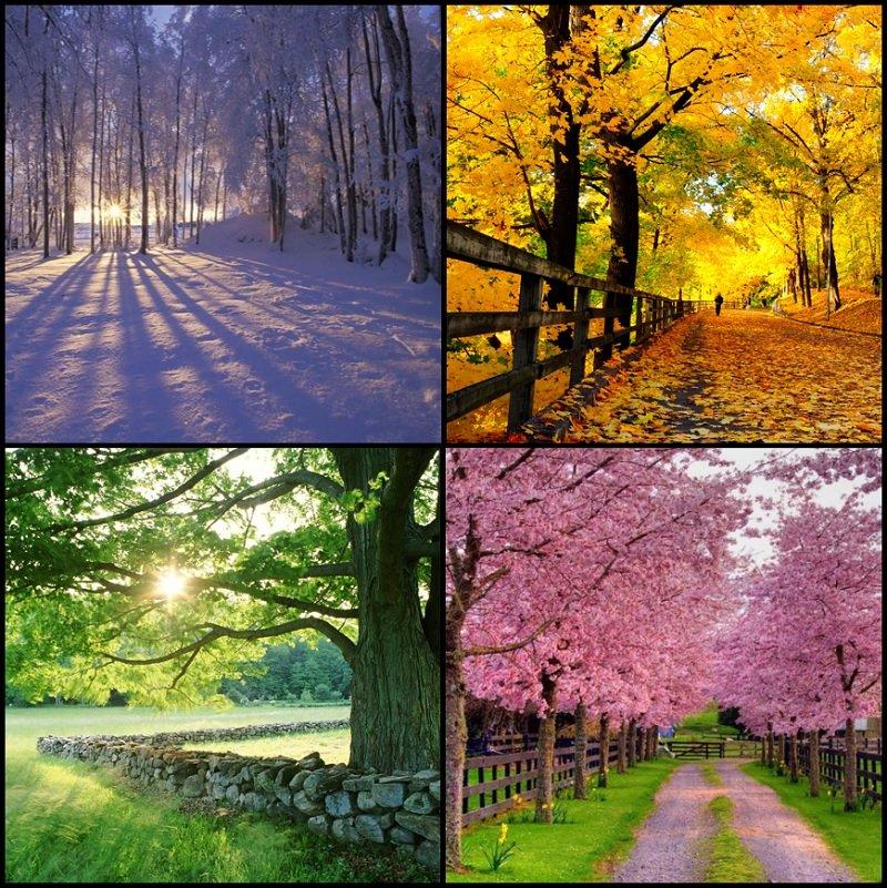Click the Seasons in Spanish Quiz