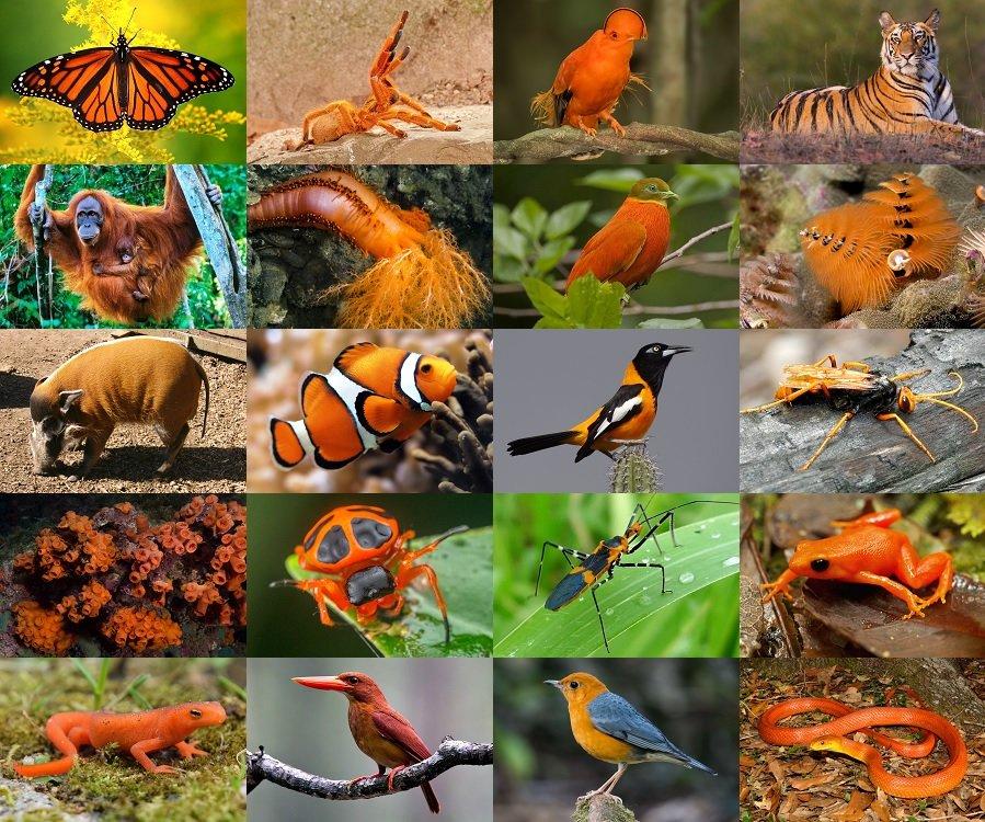 Find the Orange Animals Quiz