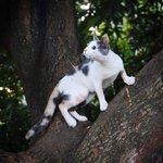 Top 100 Popular Cats Names Quiz - By littlepiggy17
